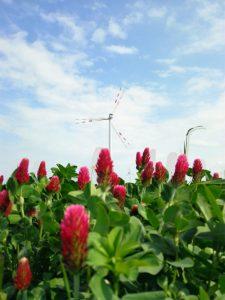 Wind turbine and flowers