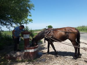 We had a brief water stop at a shady picnic area beside a shrine... and along comes a horse and cart, and the owner pumps some water for the horse to drink