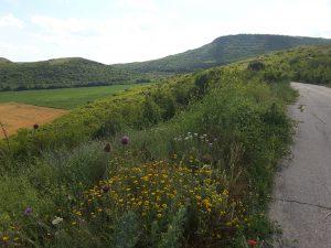 Hills near Navsha