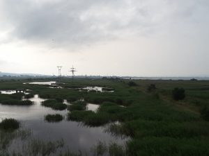 The Poda wildlife and bird reserve just out of Burgas.